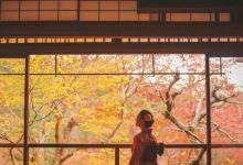 9日东京+箱根+京都·霓虹赏枫+富士温泉+风味料理