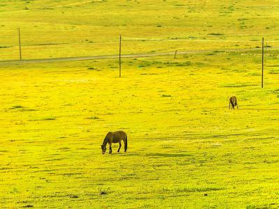 輝騰錫勒草原