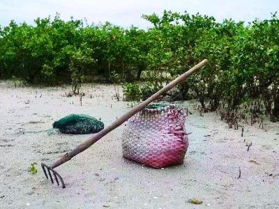 맹그로브 숲 해산물 채집 체험