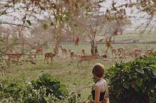 游肯尼亚非洲风装X搭配+摄影良心参考