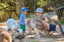 #向往的生活#在南澳大利亚拥抱动物