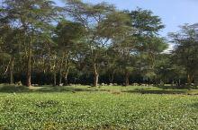 东非大裂谷中肯尼亚唯一的淡水湖——奈瓦沙湖