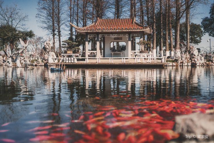 Xuanwu Lake3