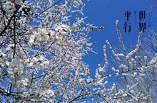 春游紫竹院公园