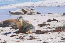 南澳大利亚:这9个美好瞬间,还原山川、大海与小日子