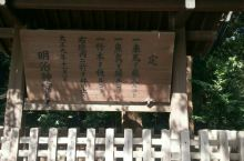 东京明治神宫 东京著名的神圣之一,见到很多当地人都穿的很正式的来参拜和祈福