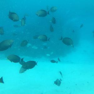 美人鱼号观光潜水艇旅游景点攻略图