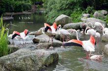 里昂金头公园 没有门票的动植物园