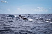 美蕊沙观鲸
