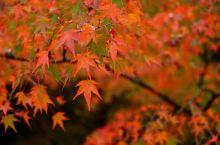 """解锁九种姿势,带你赏遍日本秋日最""""红""""美景"""