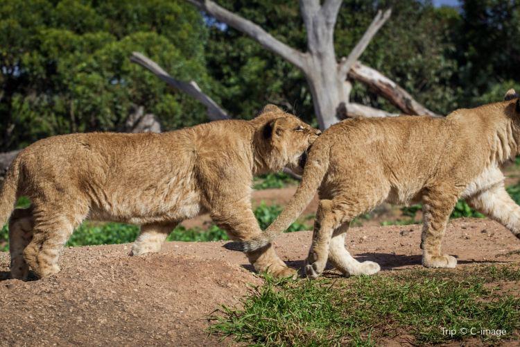 華勒比野生動物園1
