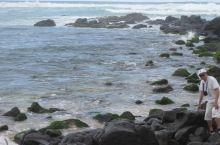 海龟湾看海龟