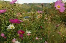 盛满鲜花的山坡