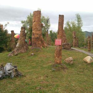 硅化木王国旅游景点攻略图