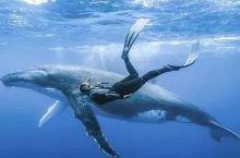 汤加斐济|大翅鲸+鲨鱼群野潜追寻