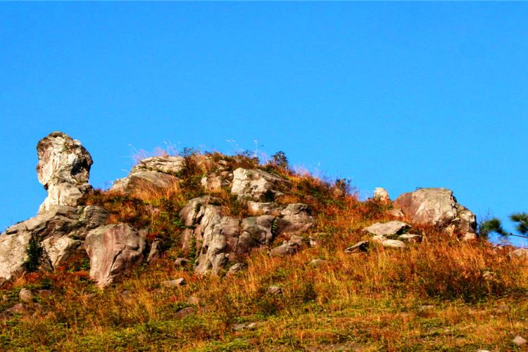 Mount Jiulong (Nine Dragons Mountain) National Forest Park4