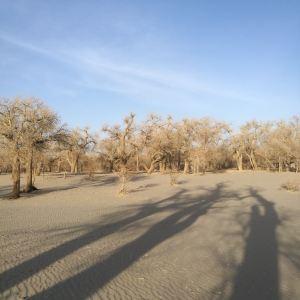大漠胡杨旅游区旅游景点攻略图