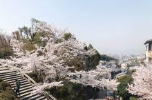 我在东京铁塔下看樱花 三月的樱花,绚烂地在枝头随风曼舞。清风一来,却又飞红如雨。鲜嫩的花瓣,坦然地逐