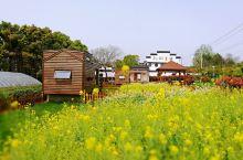 #春日寻芳#住在龙湖东院,住在春天里