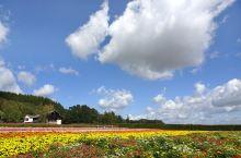 骑行在风景如windows桌面的秋之富良野美瑛中~ 驶向积丹半岛的神威岬海岸~
