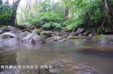 侏罗纪公园 热带雨林