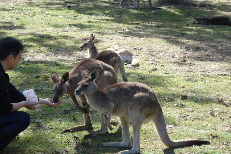 Lone Pine Koala Sanctuary4