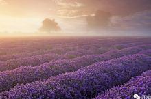 南法的浪漫芬芳,怎是一片紫色薰衣草就够满足的?
