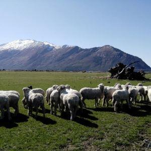 尼古拉斯山农场体验旅游景点攻略图