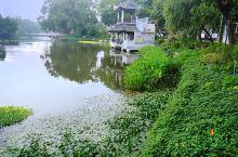 #瓜分10000元#美丽的荔湾湖公园