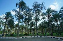 #埃及游#蒙塔扎宫花园