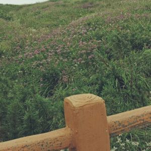 阿西里西韭菜坪旅游景点攻略图
