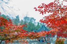 这个地方即将美出新高度,赏秋景必去!