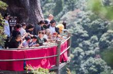 1600m悬崖餐厅+山顶星空房,人均不到¥400玩转浙南绝美山水秘境!