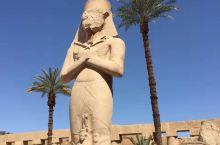 难忘的八天埃及之旅(7)