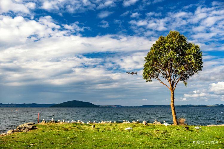 Lake Rotorua3