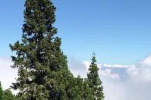阿里山的雲,近在咫尺