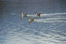 大九湖是碎落在人间的九面镜子