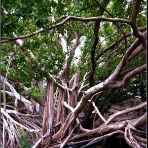 安平树屋旅游景点攻略图