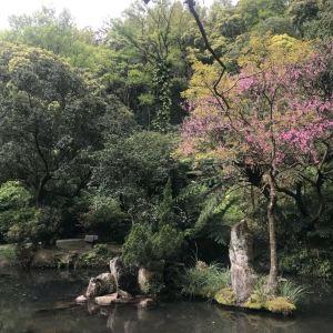 竹子湖旅游景点攻略图