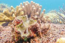 菲律宾巴拉望浮潜点推荐 | 燕子水上平台