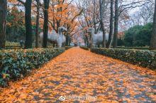 南京的秋天那么美,攻略送给你!