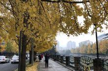 秋末冬初,又到银杏金黄的时节