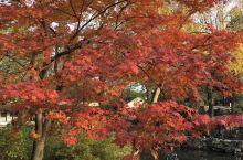 秋色迷人眼