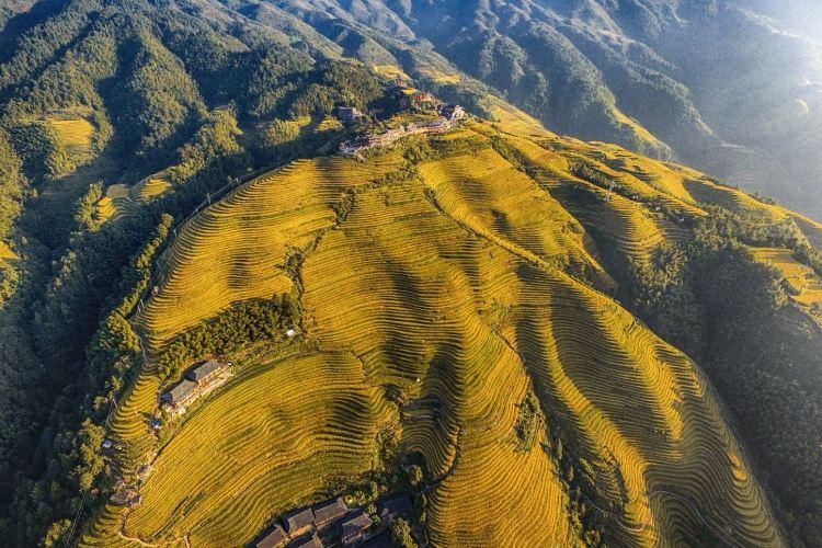 Jinkeng Rice Terraces1