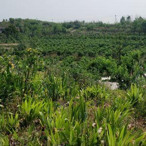 自贡尖山风景区旅游景点攻略图