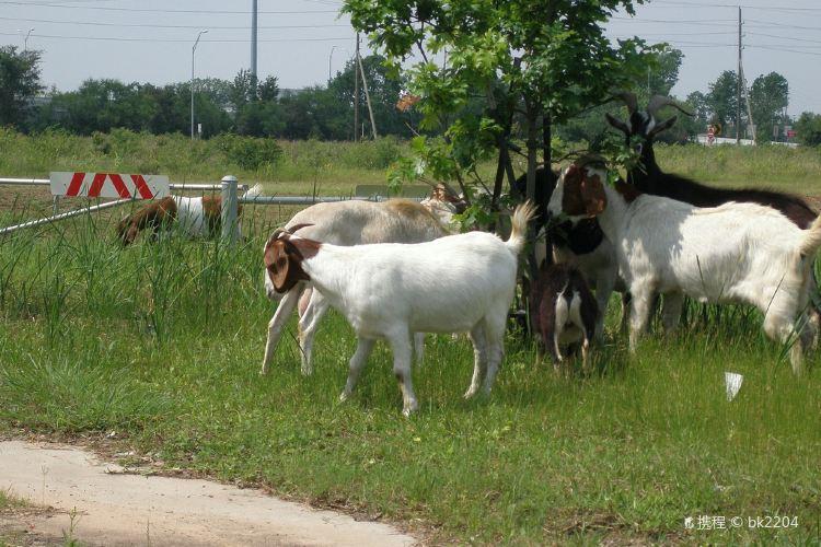 衝浪山羊農場1