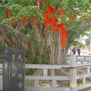"""靖安游记图文-中国""""天下第一""""美誉目的地榜单(十一)"""