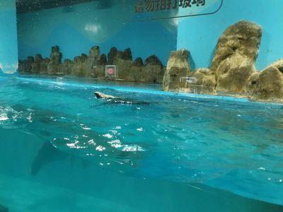 廣漢海立方海洋親子樂園