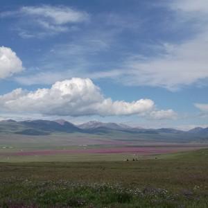 喀纳斯游记图文-渐入佳境的北疆行