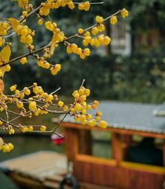 [乌镇游记图片] 重启后的江南水乡诗意乌镇,等你来过个不一样的惬意假期